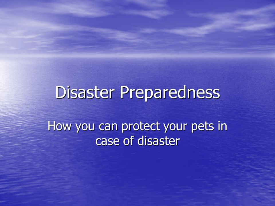 Disaster Preparedness for Pets - Overview Have a disaster kit in advance Have a disaster kit in advance If you evacuate, take the pets with you If you evacuate, take the pets with you Don't forget ID Don't forget ID Find a safe place ahead of time Find a safe place ahead of time What to do if you decide to stay What to do if you decide to stay What to do as the disaster approaches What to do as the disaster approaches What to do in case you aren't home What to do in case you aren't home What to do after the disaster What to do after the disaster Other evacuation tips Other evacuation tips