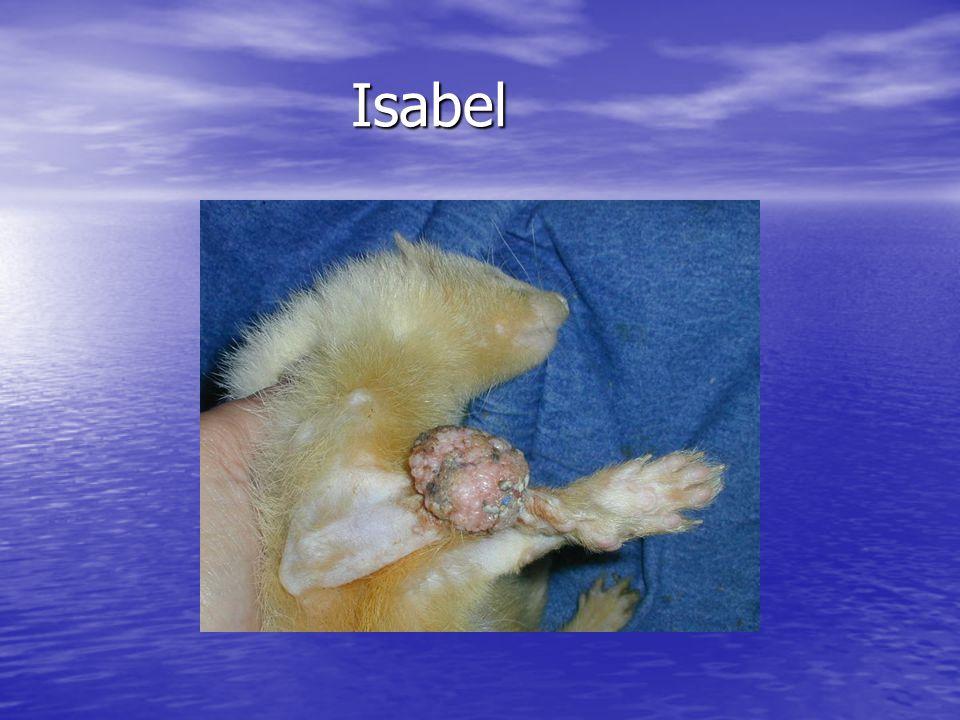 Isabel Isabel