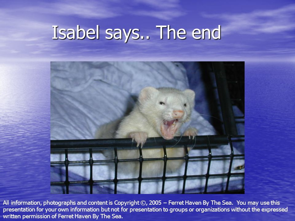 Isabel says.. The end Isabel says.. The end All information, photographs and content is Copyright ©, 2005 – Ferret Haven By The Sea. You may use this