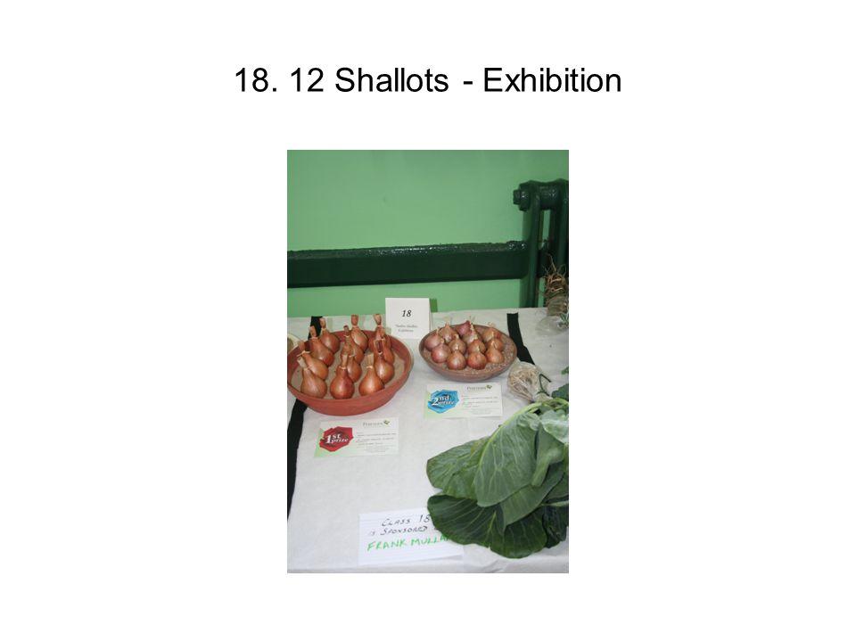 18. 12 Shallots - Exhibition