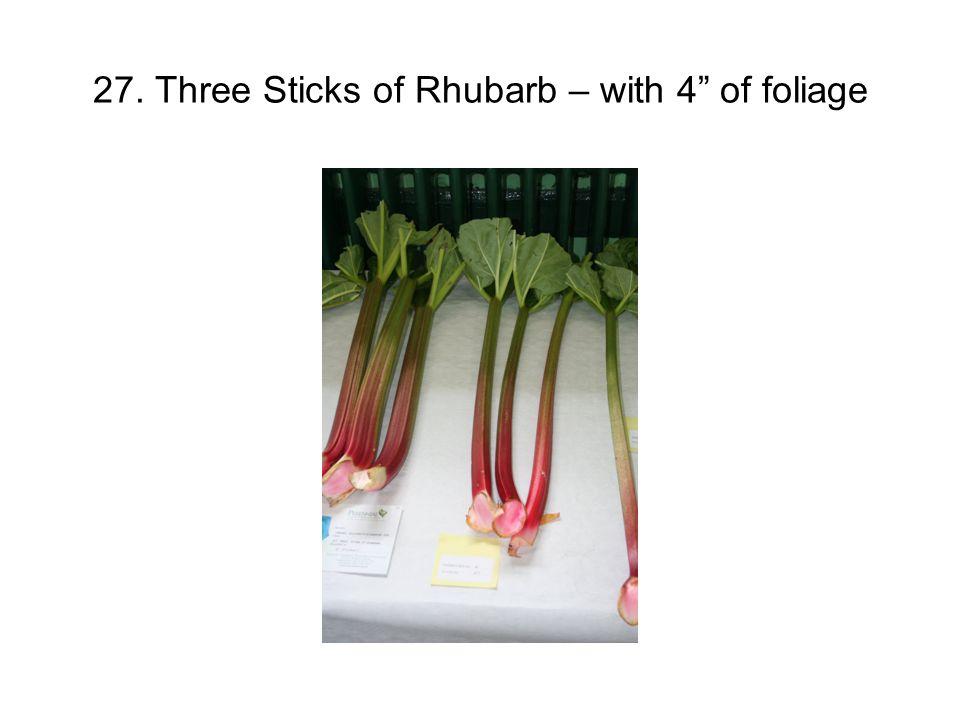 27. Three Sticks of Rhubarb – with 4 of foliage