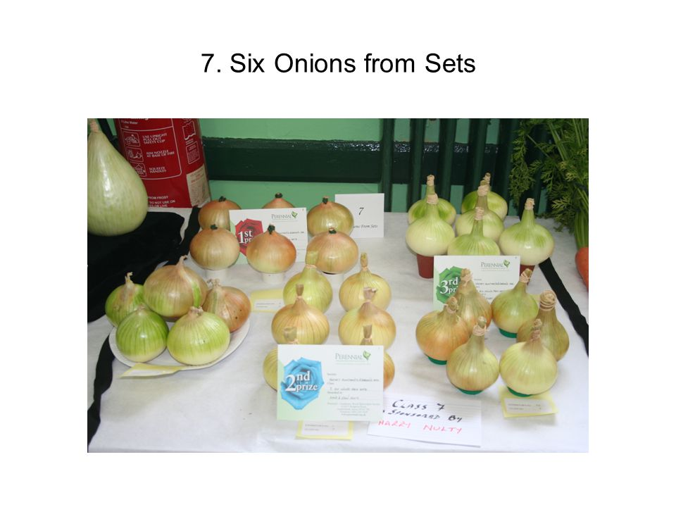 7. Six Onions from Sets