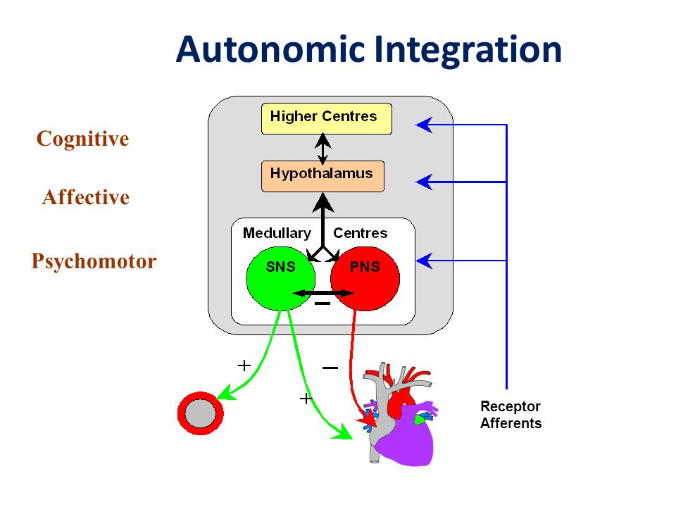 Autonomic Integration Receptor Afferents Cognitive Affective Psychomotor