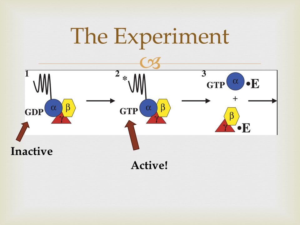  The Experiment Inactive Active!