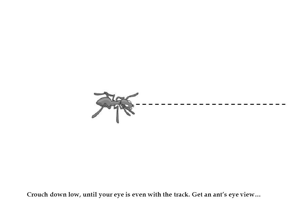 Ant Crouch down low, until your eye is even with the track. Get an ant's eye view…