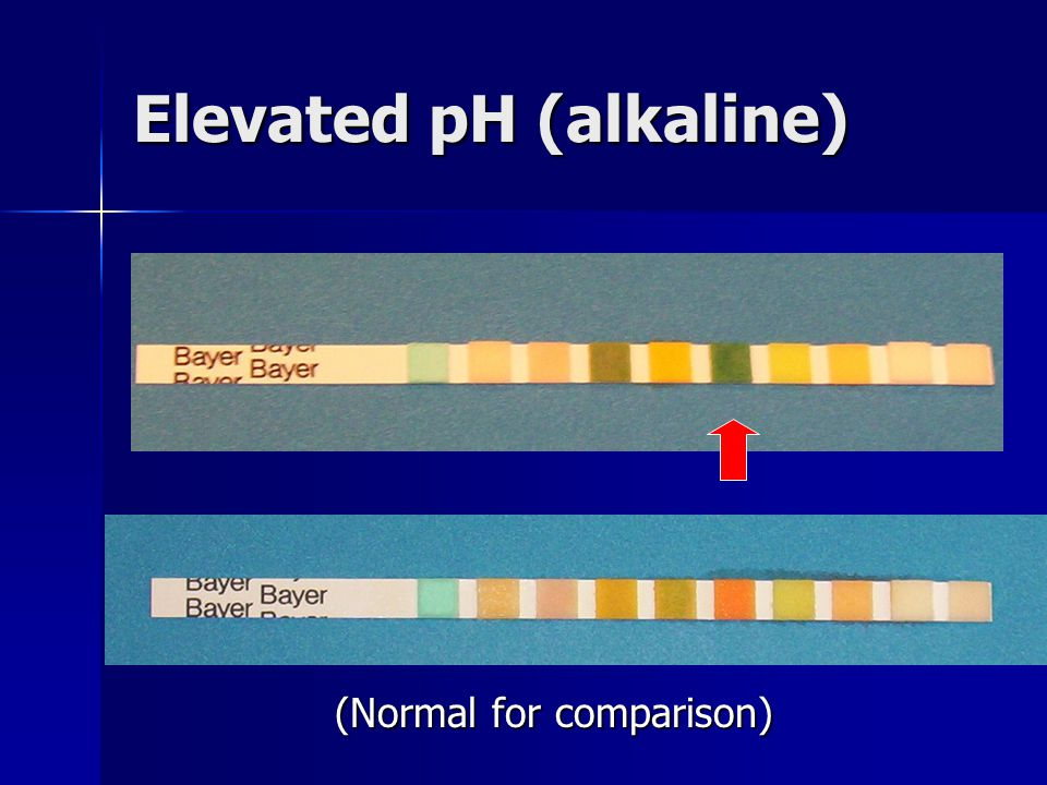 Elevated pH (alkaline) (Normal for comparison)