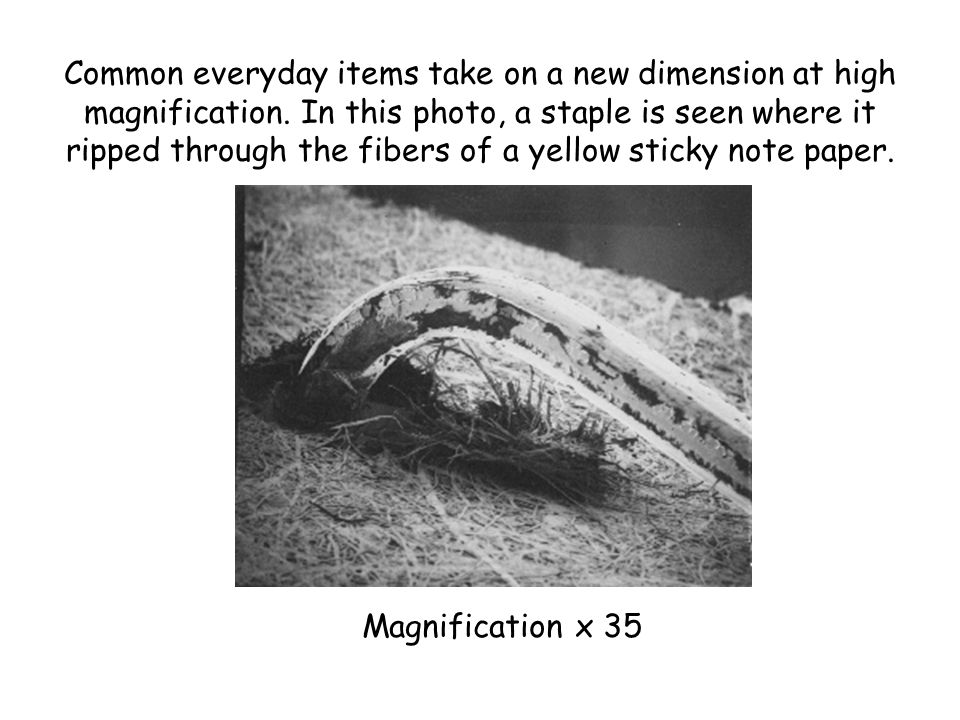 Common everyday items take on a new dimension at high magnification. In this photo, a staple is seen where it ripped through the fibers of a yellow st
