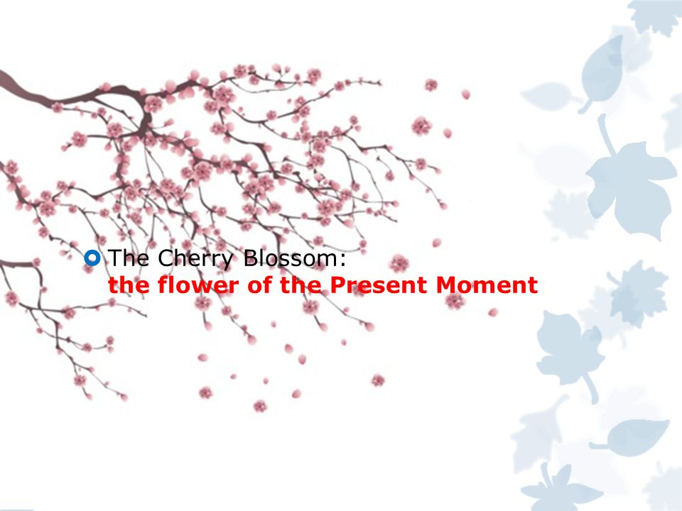  The Cherry Blossom: the flower of the Present Moment