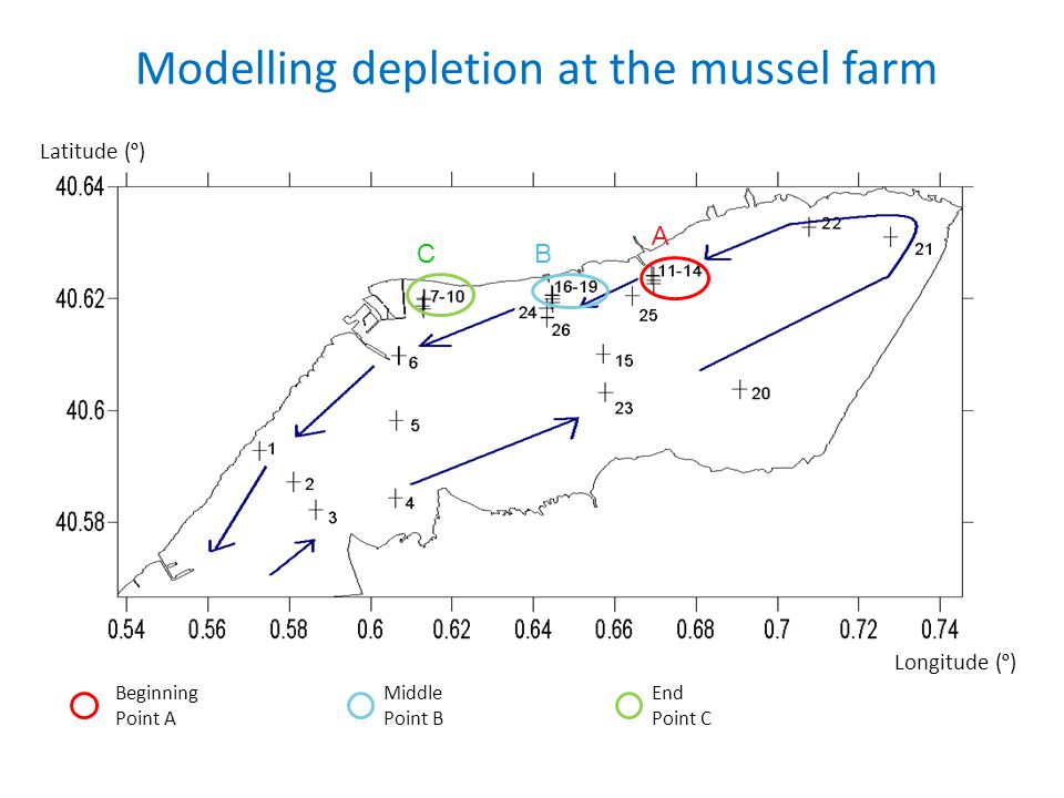 Modelling depletion at the mussel farm Beginning Point A Middle Point B End Point C Latitude ( º ) Longitude ( º ) A BC