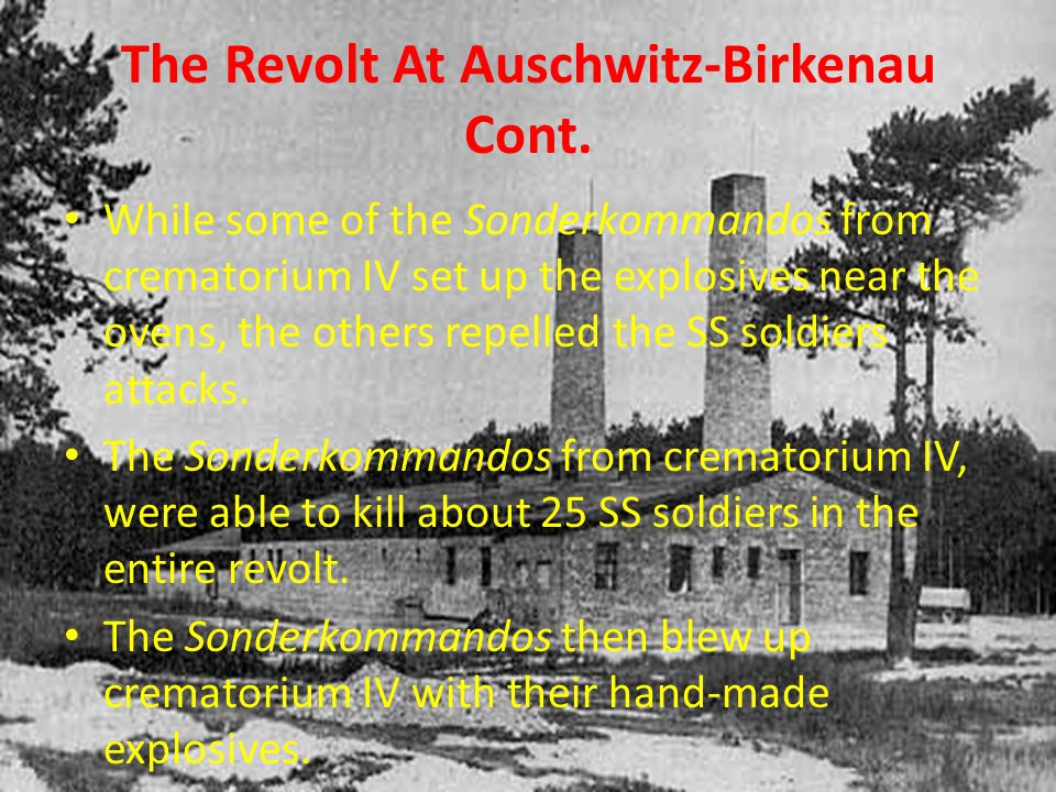 The Revolt At Auschwitz-Birkenau Cont. While some of the Sonderkommandos from crematorium IV set up the explosives near the ovens, the others repelled