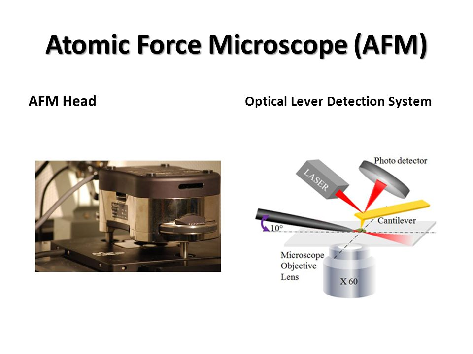 Atomic Force Microscope (AFM) AFM Head Optical Lever Detection System