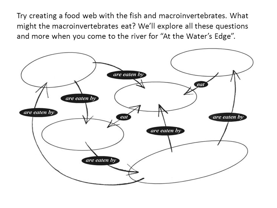 Try creating a food web with the fish and macroinvertebrates. What might the macroinvertebrates eat? We'll explore all these questions and more when y