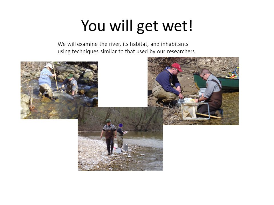 You will get wet! We will examine the river, its habitat, and inhabitants using techniques similar to that used by our researchers.