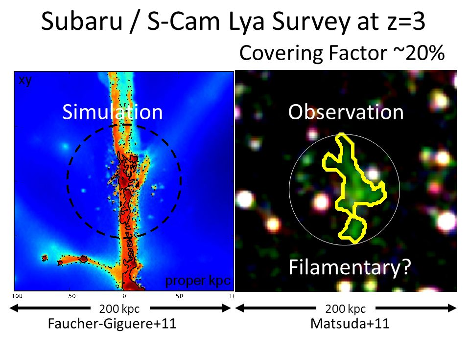 Subaru / S-Cam Lya Survey at z=3 Faucher-Giguere+11 200 kpc Matsuda+11 Filamentary? ObservationSimulation Covering Factor ~20%