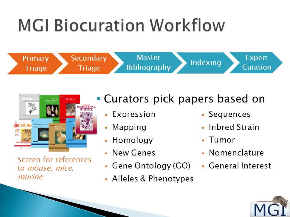 Primary Triage Secondary Triage Master Bibliography Indexing Expert Curation  Curators pick papers based on  Expression  Mapping  Homology  New Genes  Gene Ontology (GO)  Alleles & Phenotypes  Sequences  Inbred Strain  Tumor  Nomenclature  General Interest Screen for references to mouse, mice, murine