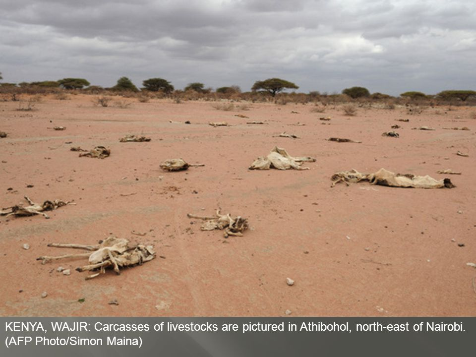 KENYA, DADAAB: An aid worker rests whilst giving out flour in a food distribution centre in Dagahaley Refugee Camp.