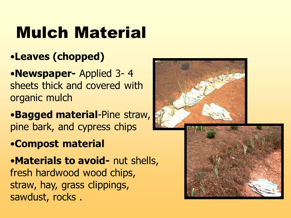 Mulch Material Leaves (chopped) Newspaper- Applied 3- 4 sheets thick and covered with organic mulch Bagged material-Pine straw, pine bark, and cypress