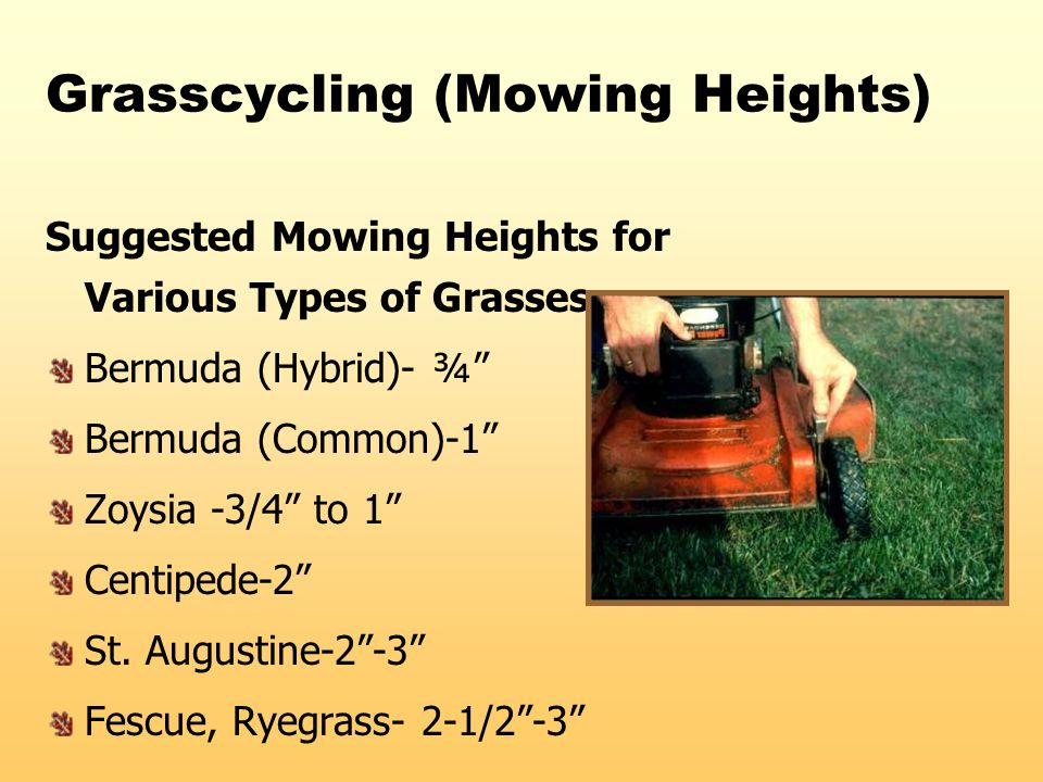 "Grasscycling (Mowing Heights) Suggested Mowing Heights for Various Types of Grasses Bermuda (Hybrid)- ¾"" Bermuda (Common)-1"" Zoysia -3/4"" to 1"" Centip"