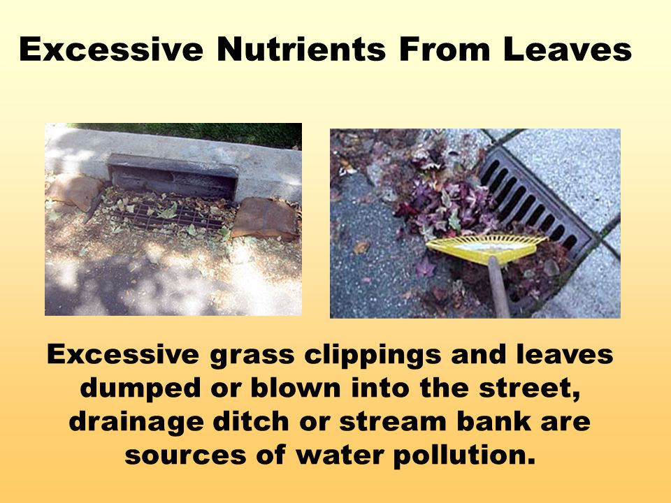 Excessive Nutrients From Leaves Excessive grass clippings and leaves dumped or blown into the street, drainage ditch or stream bank are sources of wat