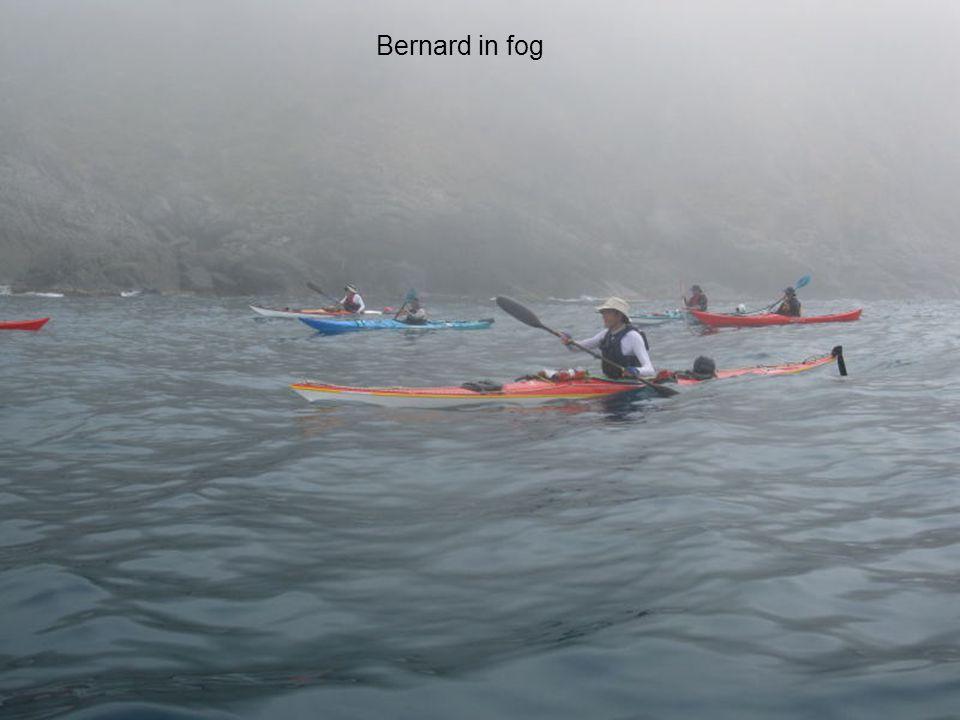 Bernard in fog