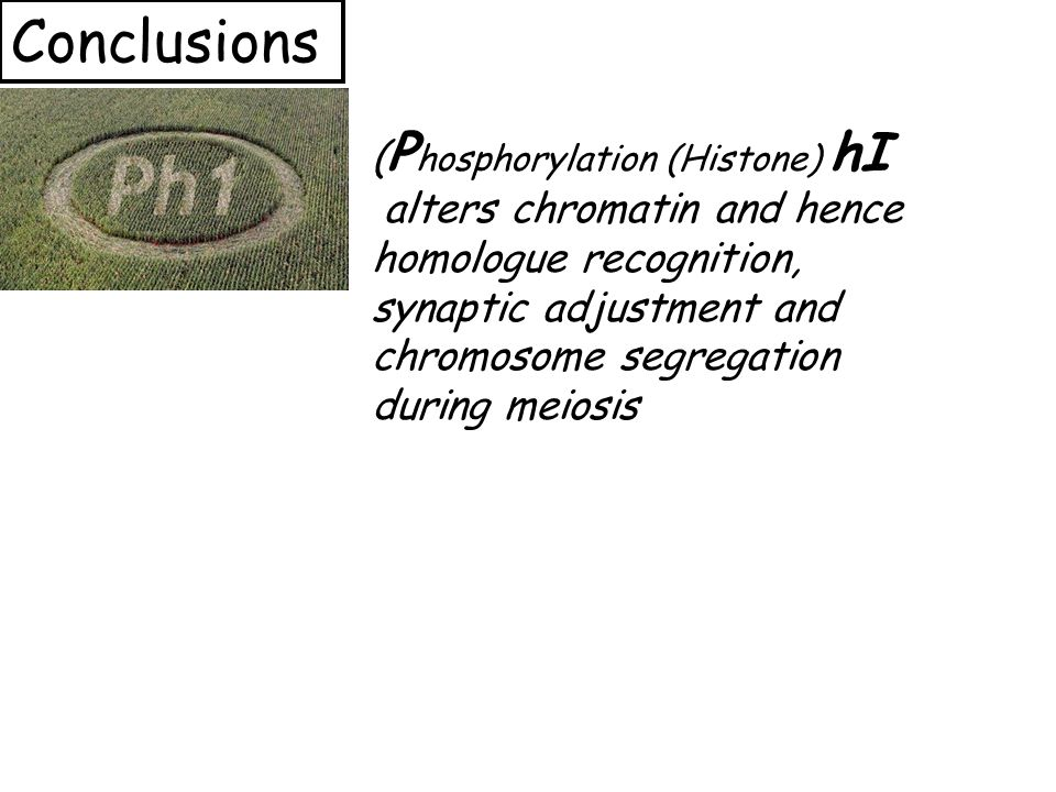 ( P hosphorylation (Histone) hI alters chromatin and hence homologue recognition, synaptic adjustment and chromosome segregation during meiosis Conclusions