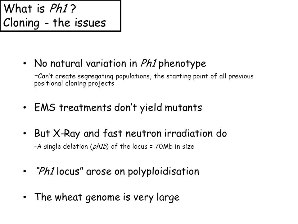 No natural variation in Ph1 phenotype - Can't create segregating populations, the starting point of all previous positional cloning projects EMS treatments don't yield mutants But X-Ray and fast neutron irradiation do -A single deletion (ph1b) of the locus = 70Mb in size Ph1 locus arose on polyploidisation The wheat genome is very large What is Ph1 .