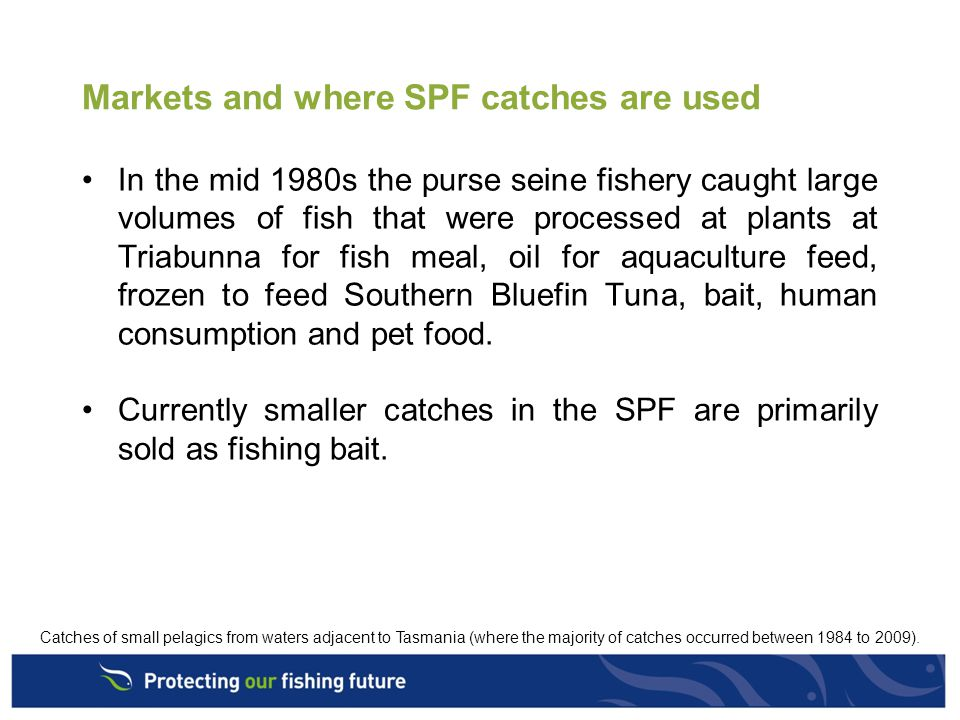Markets and where SPF catches are used In the mid 1980s the purse seine fishery caught large volumes of fish that were processed at plants at Triabunna for fish meal, oil for aquaculture feed, frozen to feed Southern Bluefin Tuna, bait, human consumption and pet food.