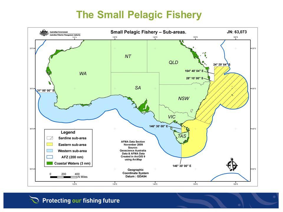 The Small Pelagic Fishery
