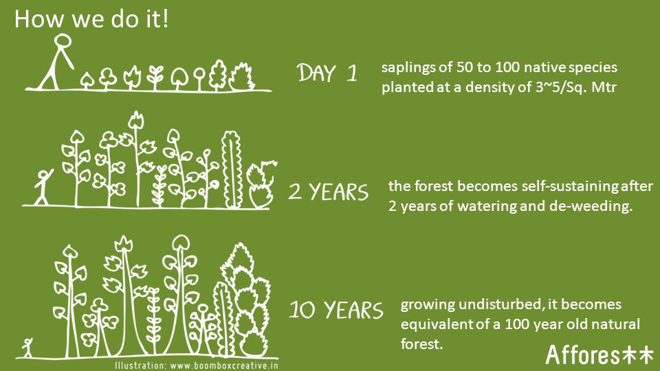 saplings of 50 to 100 native species planted at a density of 3~5/Sq.