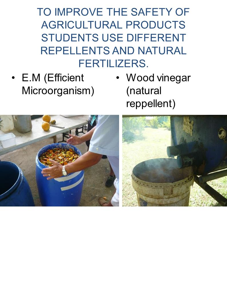 TO IMPROVE THE SAFETY OF AGRICULTURAL PRODUCTS STUDENTS USE DIFFERENT REPELLENTS AND NATURAL FERTILIZERS. E.M (Efficient Microorganism) Wood vinegar (