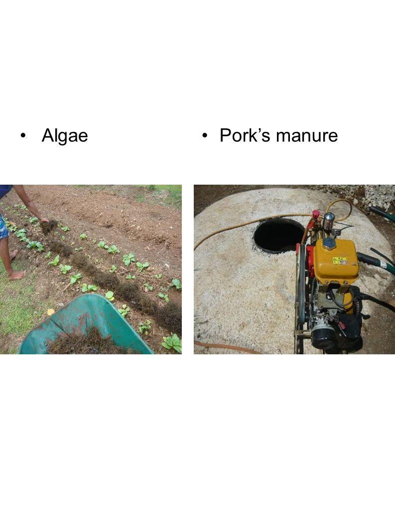 AlgaePork's manure