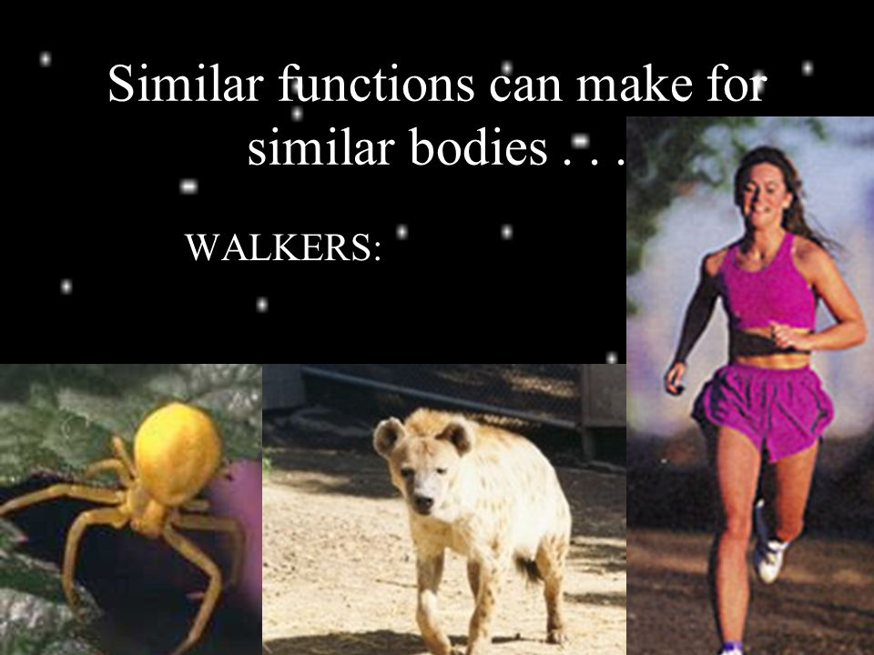 Similar functions can make for similar bodies... WALKERS: