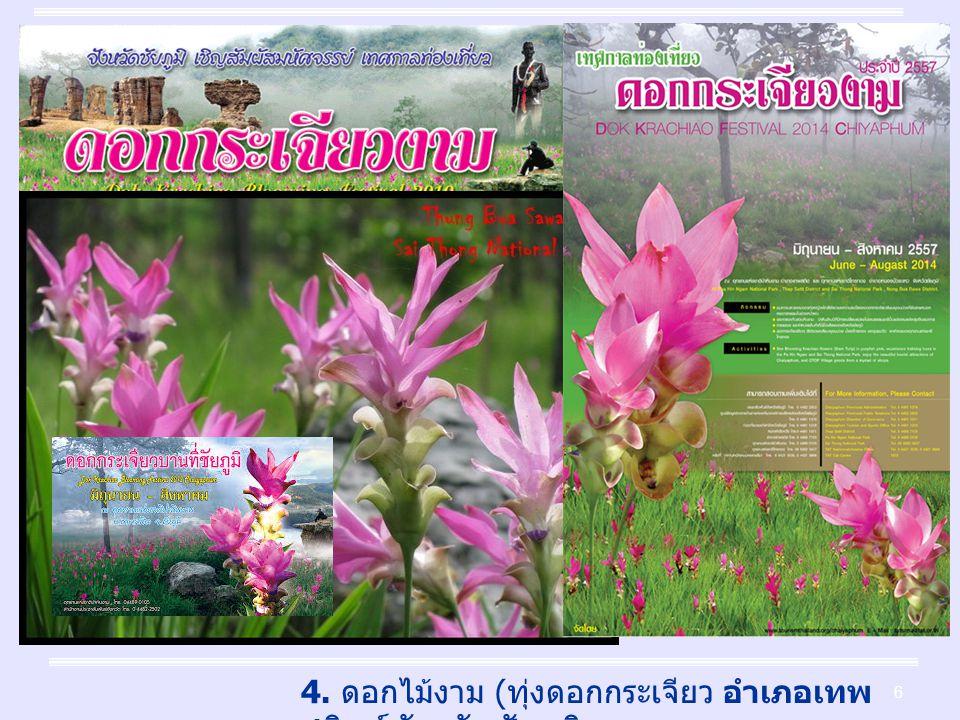 6 4. ดอกไม้งาม ( ทุ่งดอกกระเจียว อำเภอเทพ สถิตย์ จังหวัดชัยภูมิ