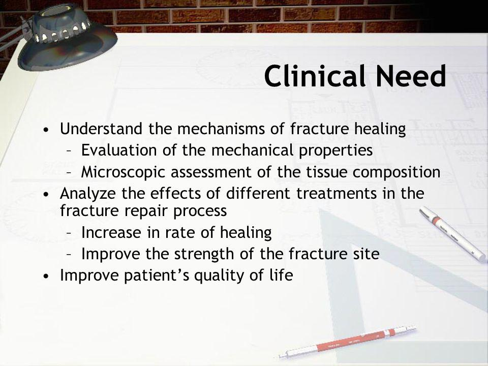 Clinical Need Understand the mechanisms of fracture healing –Evaluation of the mechanical properties –Microscopic assessment of the tissue composition Analyze the effects of different treatments in the fracture repair process –Increase in rate of healing –Improve the strength of the fracture site Improve patient's quality of life