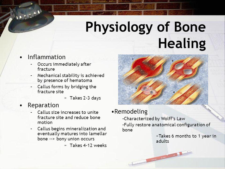 Physiology of Bone Healing Inflammation –Occurs immediately after fracture –Mechanical stability is achieved by presence of hematoma –Callus forms by bridging the fracture site »Takes 2-3 days Reparation –Callus size increases to unite fracture site and reduce bone motion –Callus begins mineralization and eventually matures into lamellar bone --> bony union occurs »Takes 4-12 weeks Remodeling –Characterized by Wolff's Law –Fully restore anatomical configuration of bone »Takes 6 months to 1 year in adults