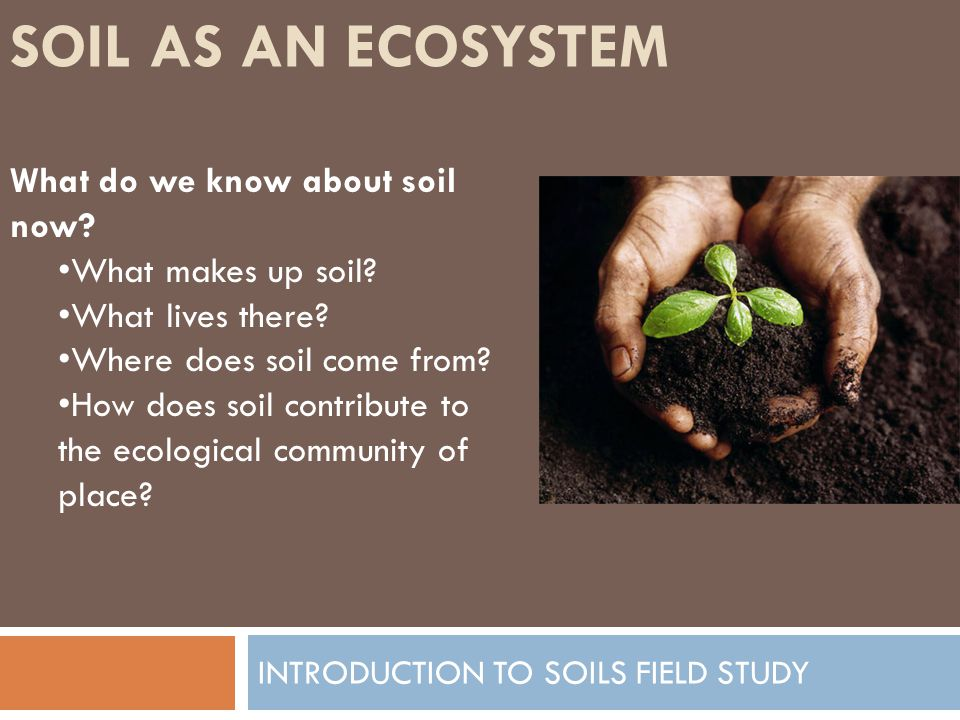 SOIL AS AN ECOSYSTEM INTRODUCTION TO SOILS FIELD STUDY The soil ecosystem is called The Pedosphere (From the root word pedology, which means the study of soil).