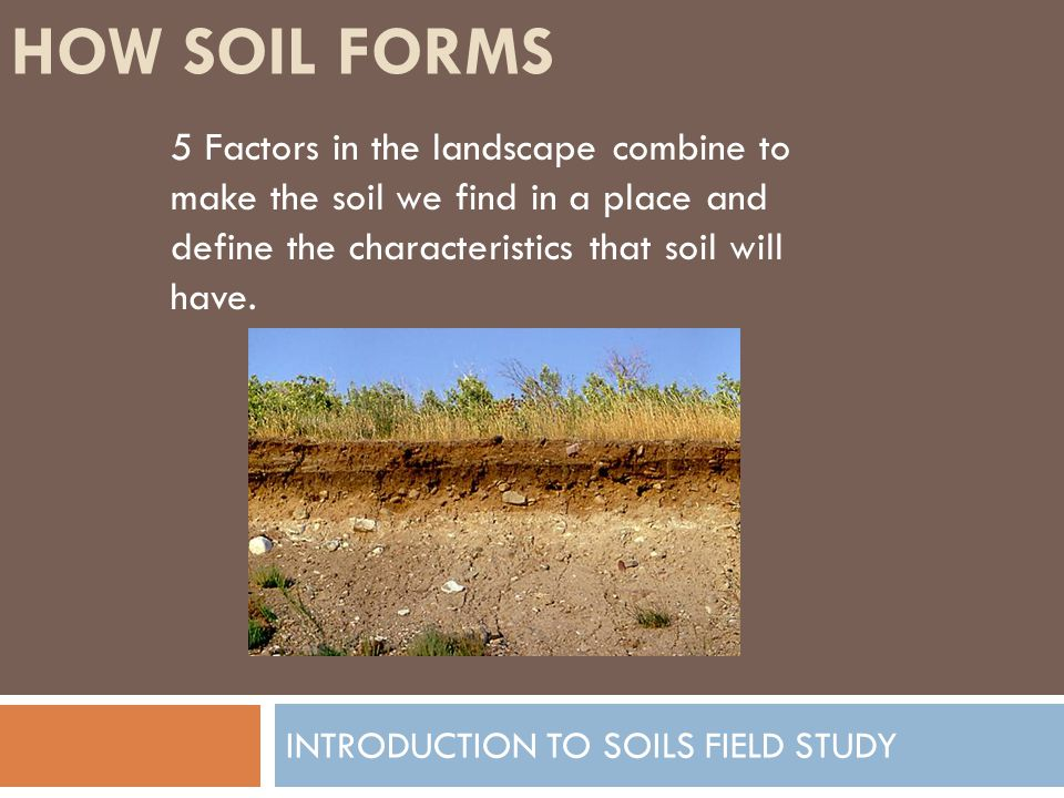 HOW SOIL FORMS INTRODUCTION TO SOILS FIELD STUDY 5 Factors in the landscape combine to make the soil we find in a place and define the characteristics