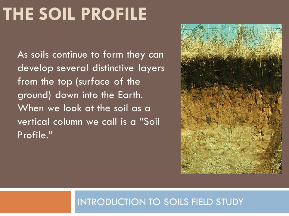 THE SOIL PROFILE INTRODUCTION TO SOILS FIELD STUDY As soils continue to form they can develop several distinctive layers from the top (surface of the