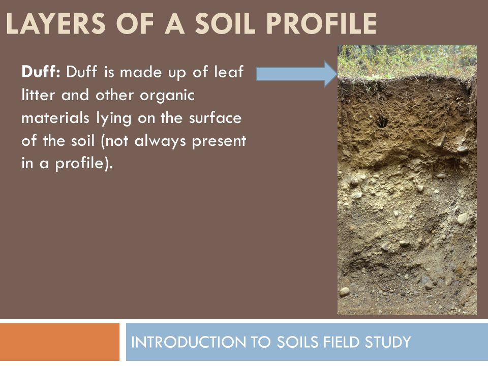 LAYERS OF A SOIL PROFILE INTRODUCTION TO SOILS FIELD STUDY Duff: Duff is made up of leaf litter and other organic materials lying on the surface of th