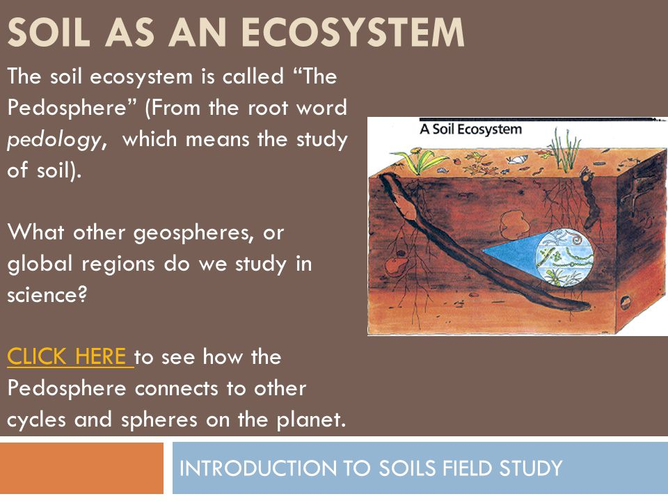 SOIL AS AN ECOSYSTEM INTRODUCTION TO SOILS FIELD STUDY Some terms we should learn to talk about soils: