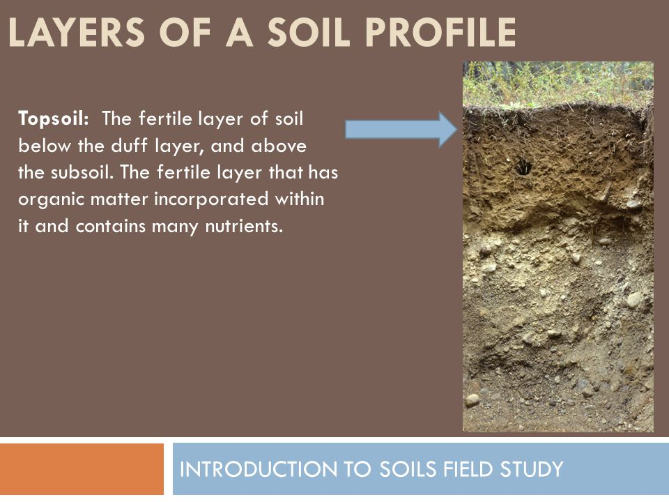 LAYERS OF A SOIL PROFILE INTRODUCTION TO SOILS FIELD STUDY Topsoil: The fertile layer of soil below the duff layer, and above the subsoil. The fertile