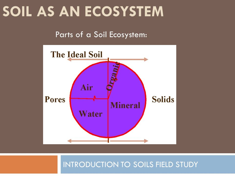 SOIL AS AN ECOSYSTEM INTRODUCTION TO SOILS FIELD STUDY Soil Air: Pore spaces for the exchange of gases.