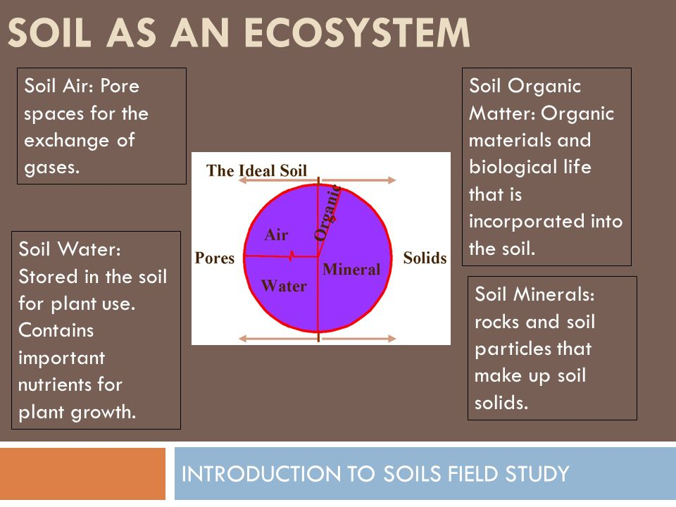 SOIL AS AN ECOSYSTEM INTRODUCTION TO SOILS FIELD STUDY Soil Air: About 25% Soil Water: About 25% Soil Organic Matter: About 6% Soil Minerals: About 44%