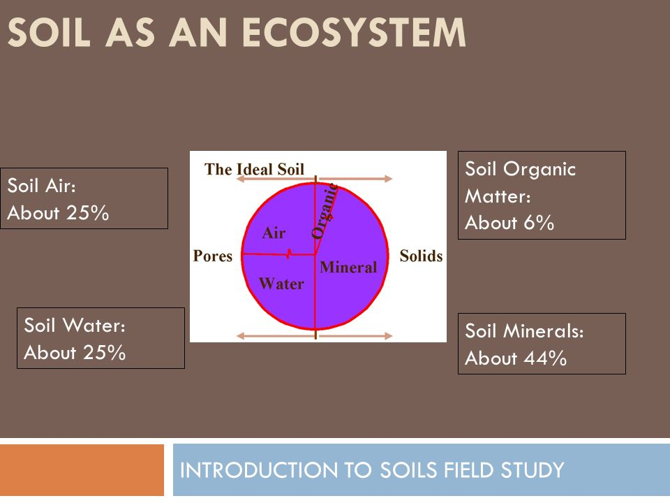 SOIL AS AN ECOSYSTEM INTRODUCTION TO SOILS FIELD STUDY Soil Air: About 25% Soil Water: About 25% Soil Organic Mater: About 6% Soil Minerals: About 44%