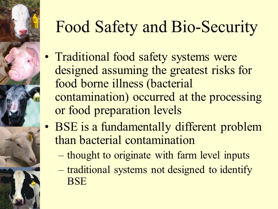Food Safety and Bio-Security Traditional food safety systems were designed assuming the greatest risks for food borne illness (bacterial contamination) occurred at the processing or food preparation levels BSE is a fundamentally different problem than bacterial contamination –thought to originate with farm level inputs –traditional systems not designed to identify BSE