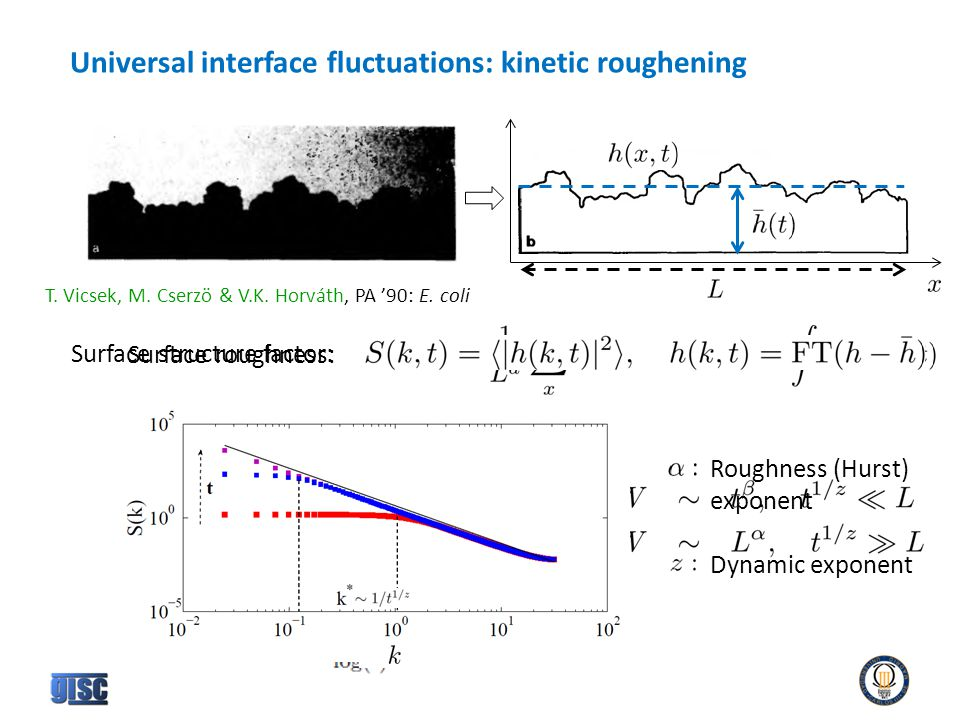 Universal interface fluctuations: kinetic roughening T.