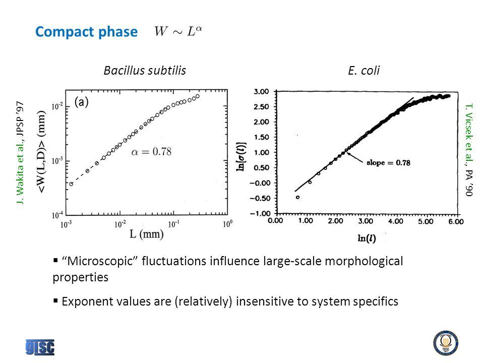 Compact phase Bacillus subtilisE. coli T. Vicsek et al., PA '90 J.