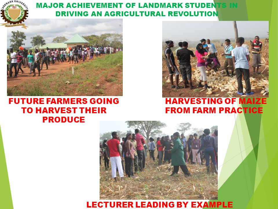 MAJOR ACHIEVEMENT OF LANDMARK STUDENTS IN DRIVING AN AGRICULTURAL REVOLUTION HARVESTING OF MAIZE FROM FARM PRACTICE FUTURE FARMERS GOING TO HARVEST THEIR PRODUCE LECTURER LEADING BY EXAMPLE
