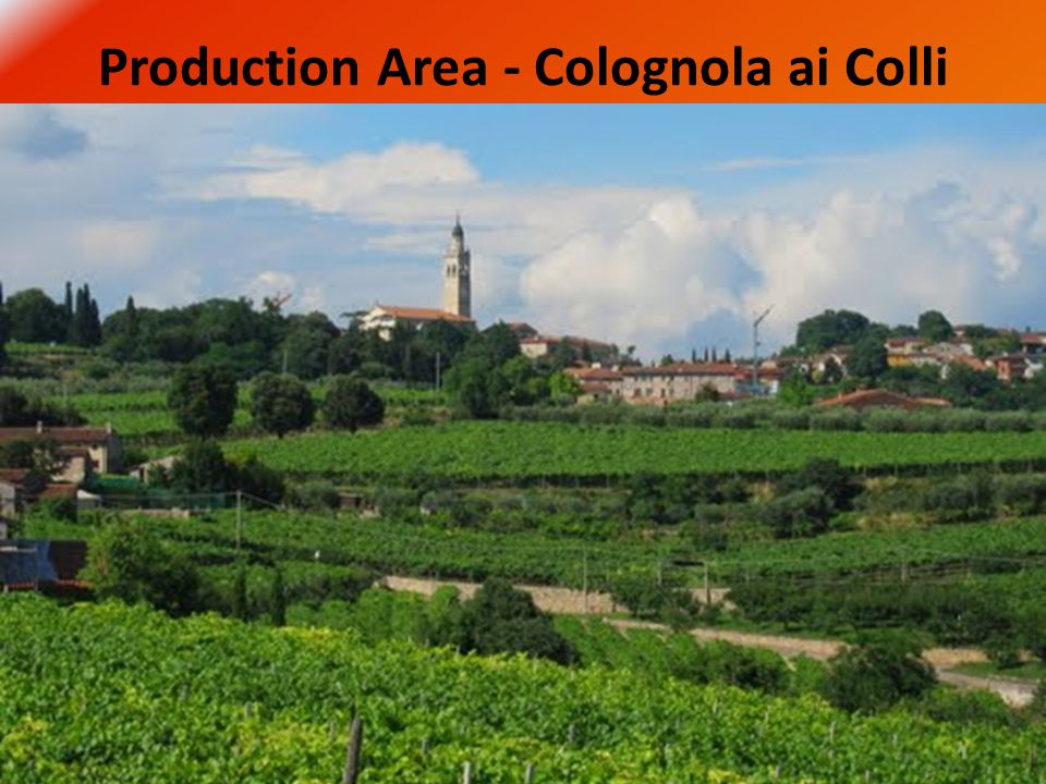 Production Area - Colognola ai Colli