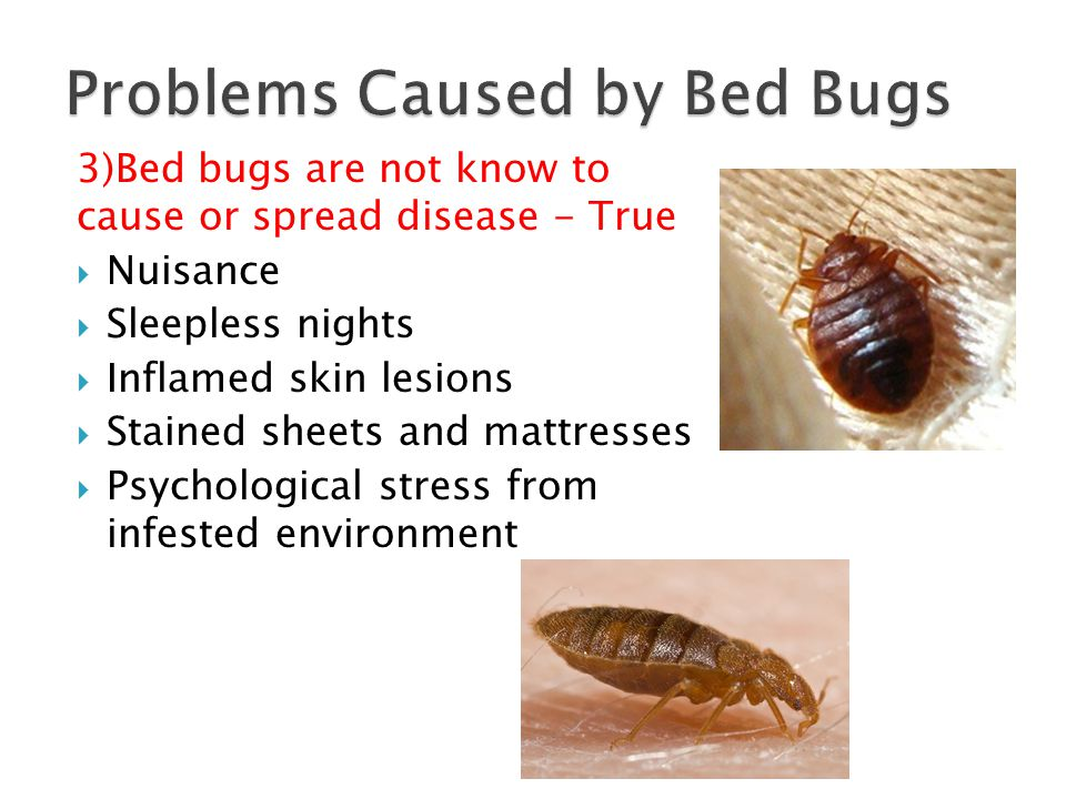 Encasing a mattress and box spring will prevent future bed bug infestation in your home. - False